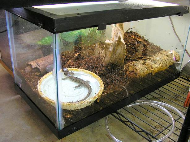 Tiger Salamander Housing