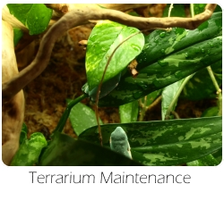 terrarium_maintenance