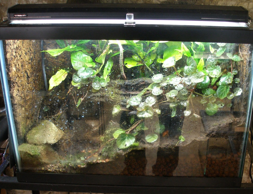 A terrarium for mantella frogs. Live plants grown in a soil mixture above a layer of expanded clay pellets for drainage. The background is cork.