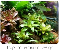 tropical_terrarium_design
