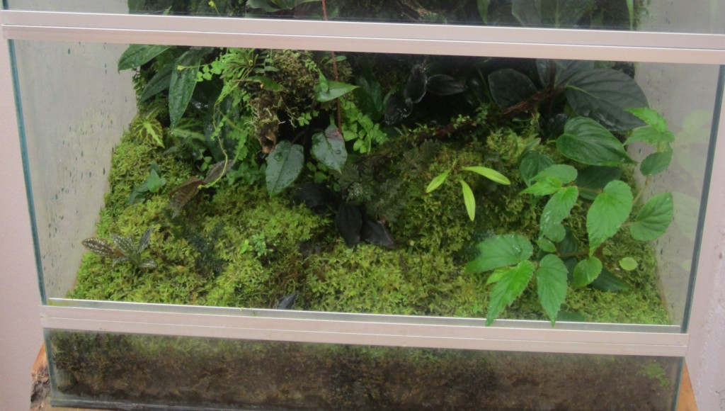 Vivarium Substrate Maintenance