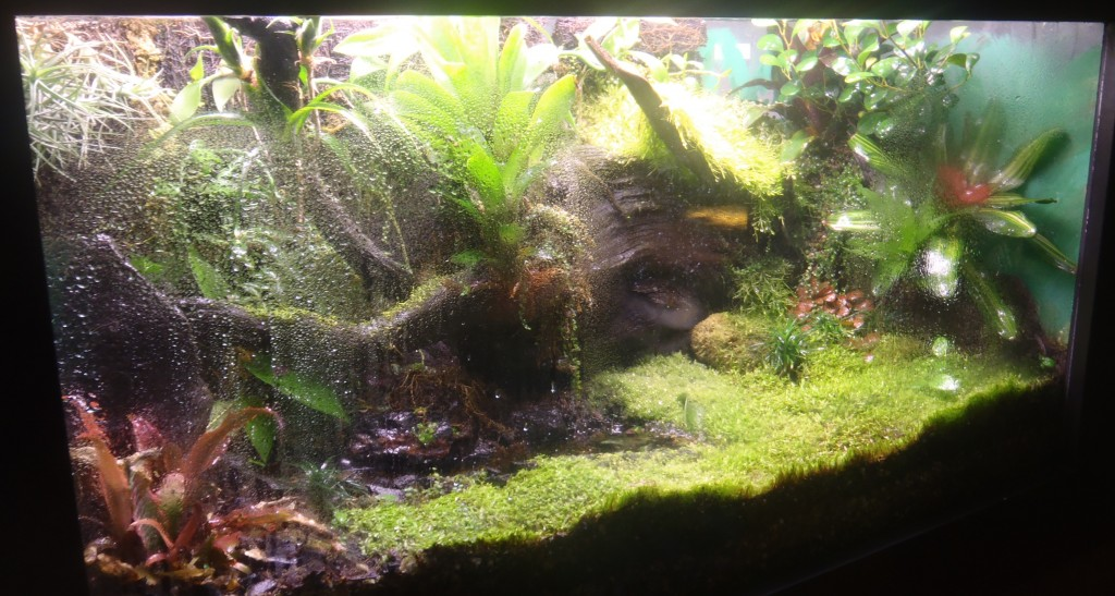 Terrarium And Vivarium Maintenance Amphibian Care