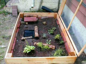 Box Turtle Pen - Outdoors
