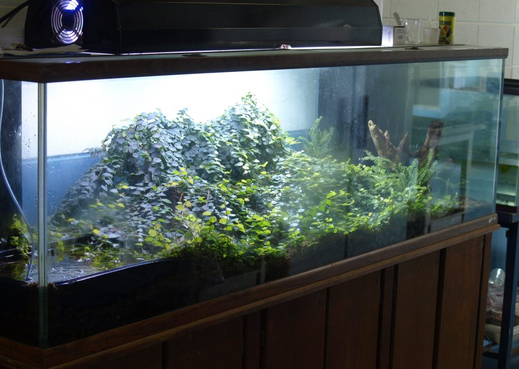 Large terrarium - Tropical Terrarium And Vivarium Creation >> Amphibian Care