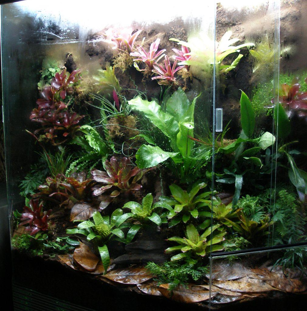 Tropical Terrarium And Vivarium Creation Amphibian Care
