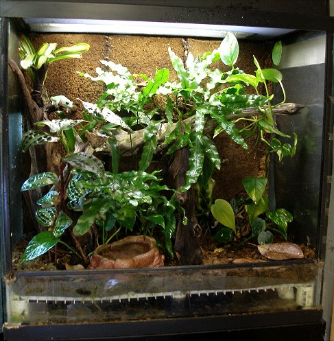 A vertically-oriented terrarium designed for Agalychnis with a false-bottom, sphagnum moss substrate, and lots of sturdy plants.