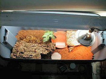 Box Turtle Enclosure - Indoors