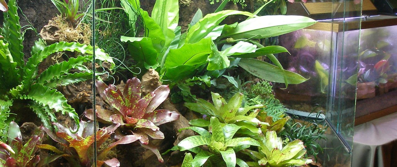 A large display terrarium planted with bromeliads and ferns