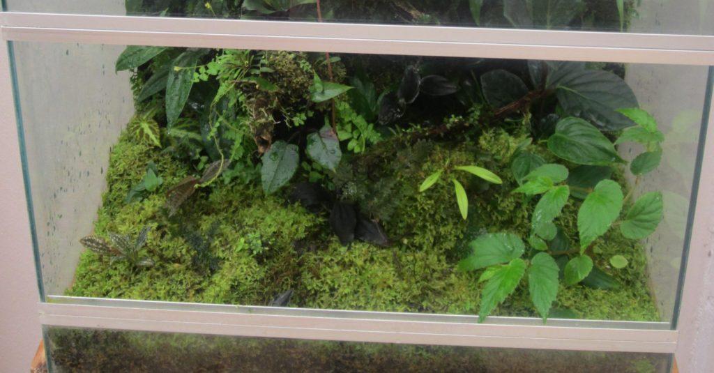 A terrarium with live moss and plants for salamanders