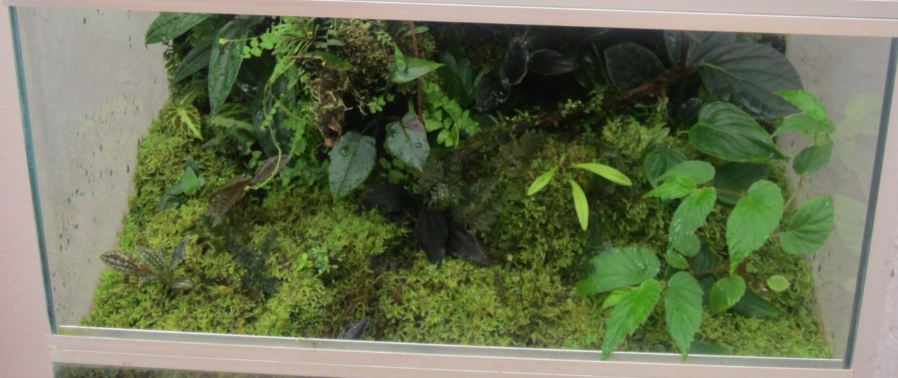 Terrarium And Vivarium Maintenance Amphibian Care