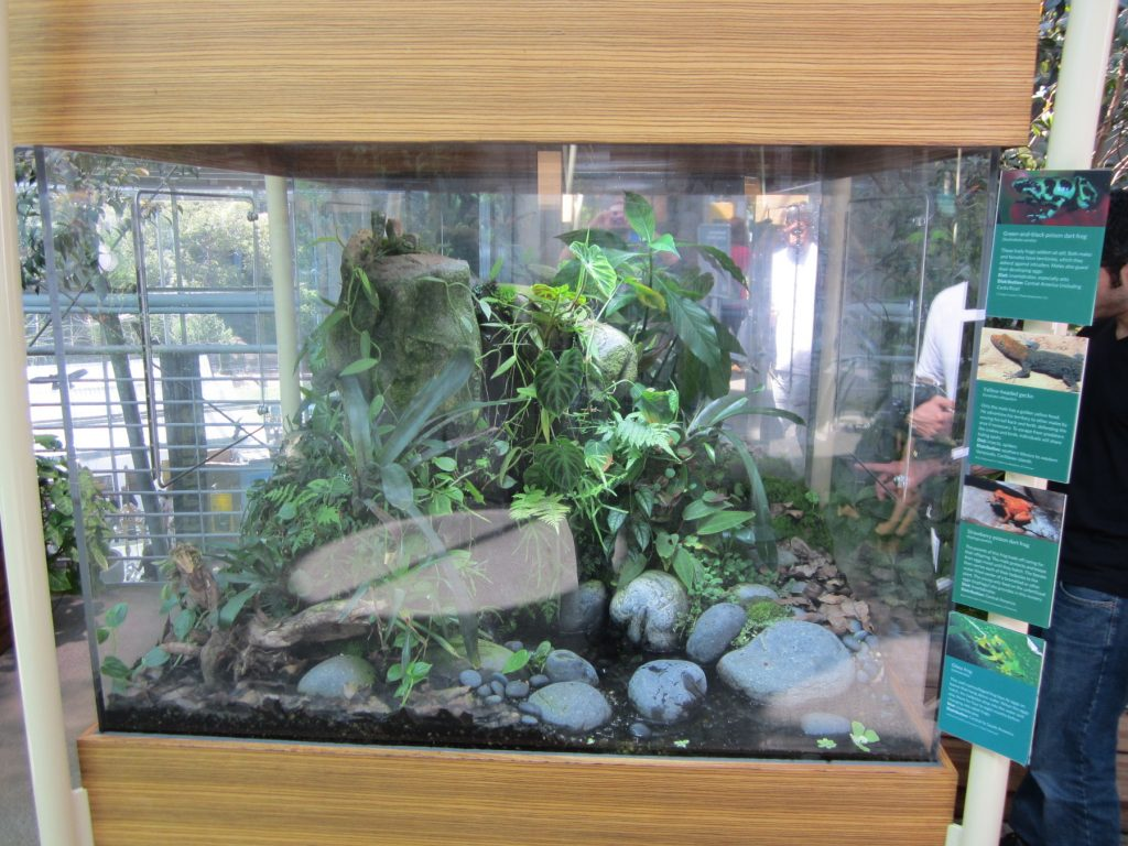 A large terrarium housing dart frogs, glass frogs, and small geckos