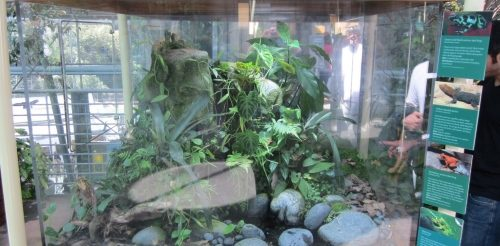 A large mixed species terrarium; Biotope Costa Rica