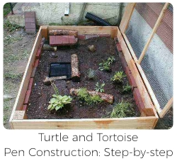 Turtle and Tortoise Pen Construction