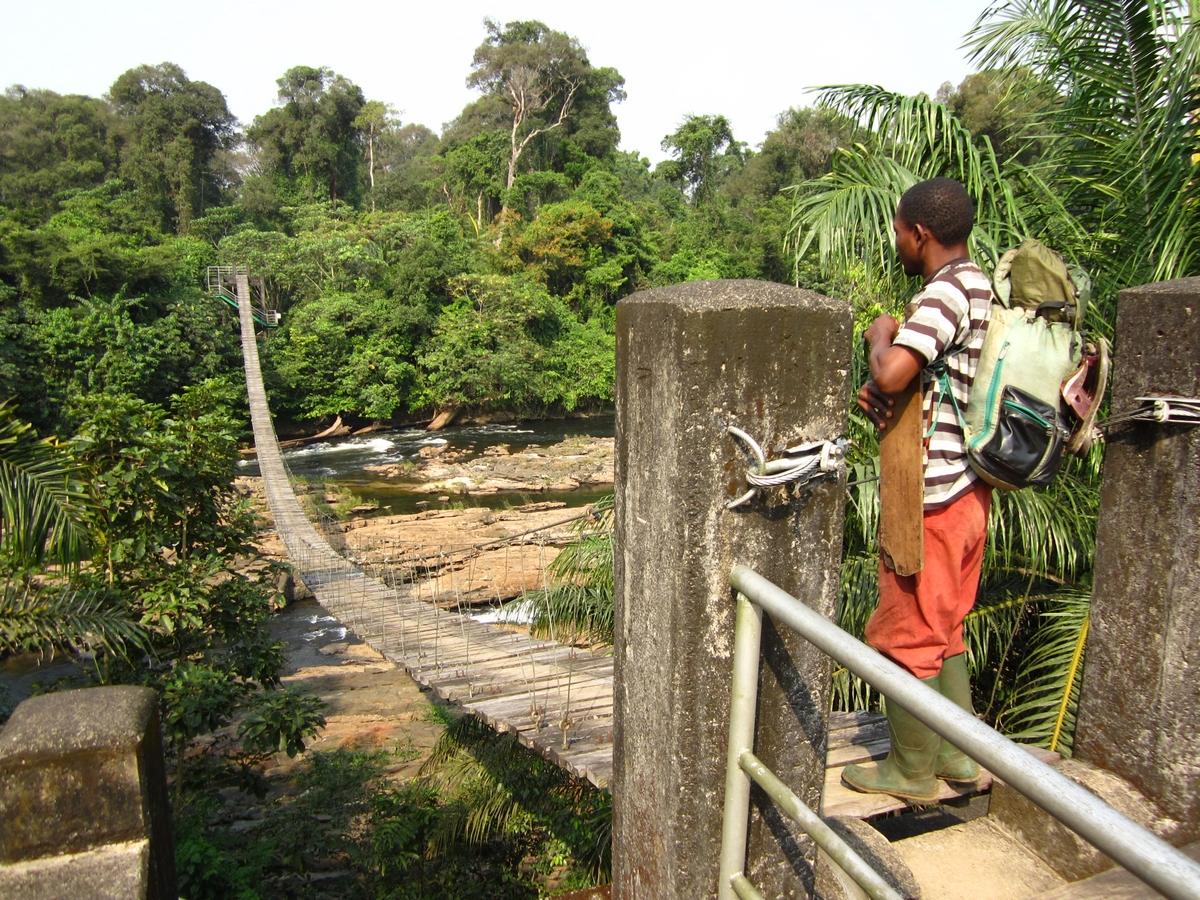 Suspension bridge outside of Korup National Park, Cameroon.