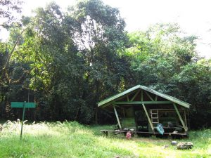 Camping in Korup National Park, Cameroon