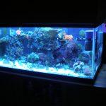A 40 gallon reef tank