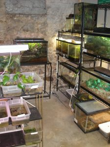 Frog room and mantella tanks