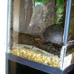 Gravel used as a drainage layer in a dart frog terrarium