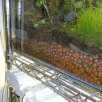 Clay pebbles used as a substrate underneath a soil mixture in a dart frog terrarium