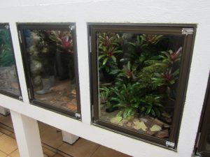 Terrariums housing Oophaga pumilio at the Costa Rican Amphibian Research Center