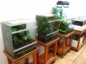 Costa Rican Amphibian Research Center (https://cramphibian.com/)