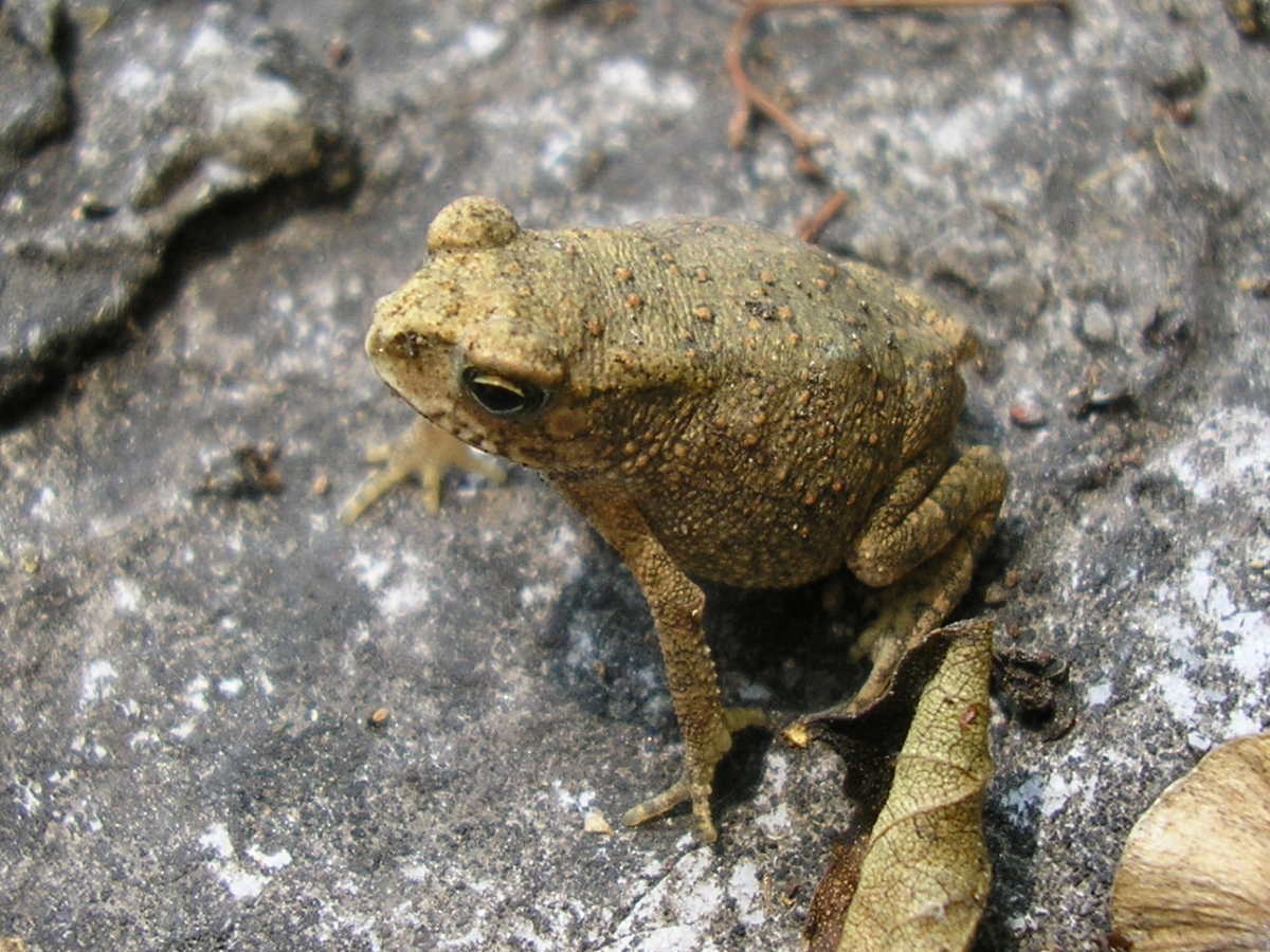 Toad near Guilin