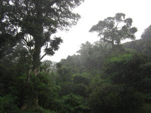 Montagne d'Ambre National Park