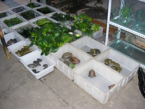 Turtle and tortoise market