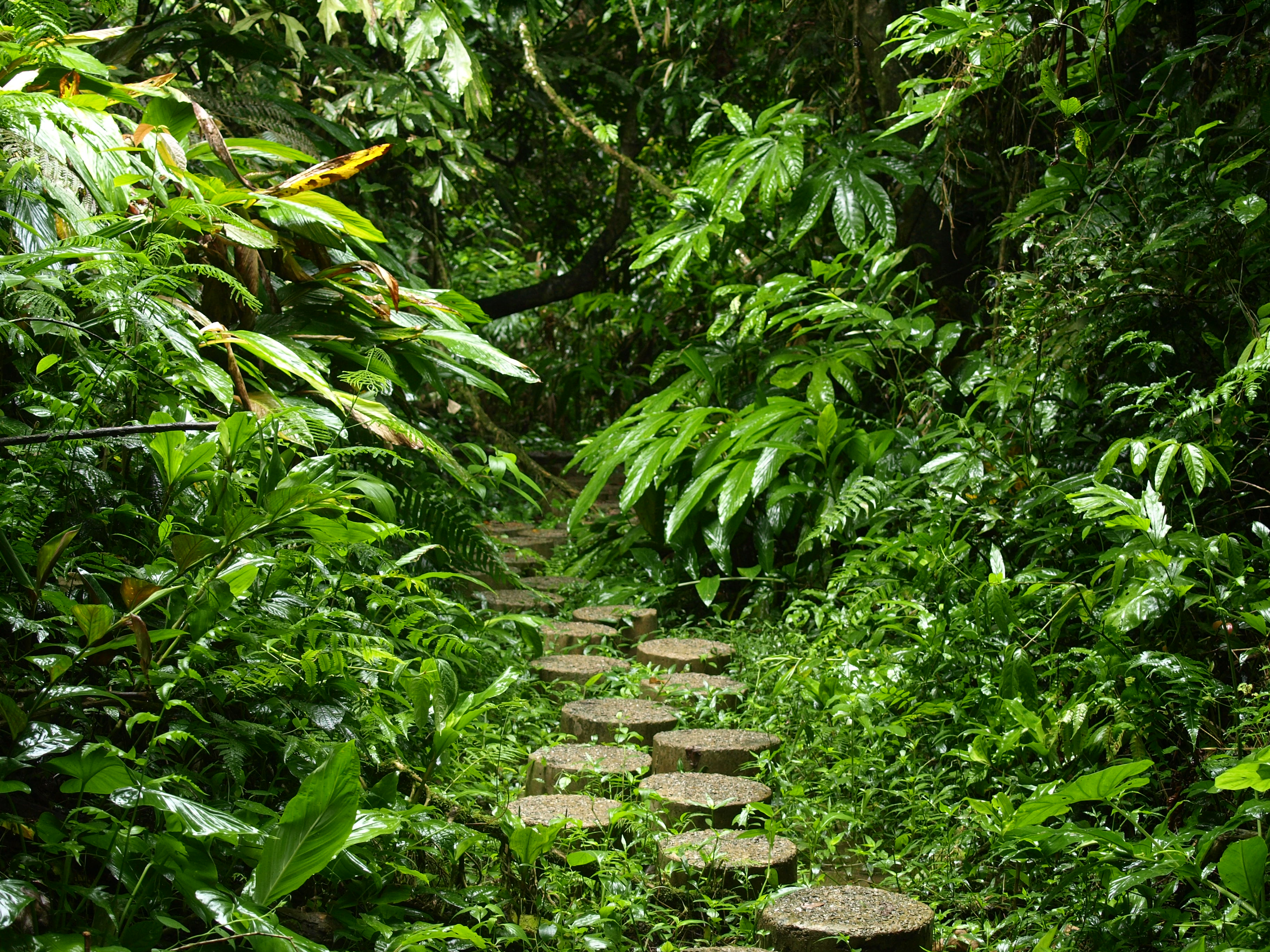 Rain forest parcel at Xishuangbanna Tropical Botanical Gardens