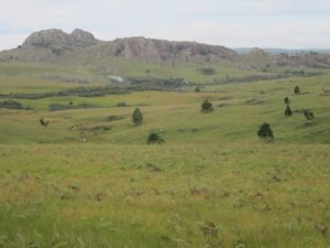 Antoetra landscape, home of Mantella cowani