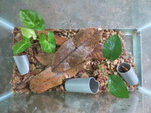 Terrarium for juvenile Mantella aurantiaca
