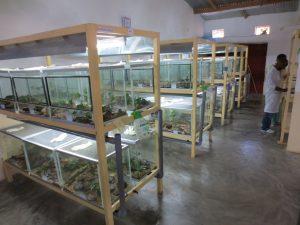 Mantella aurantiaca terrariums