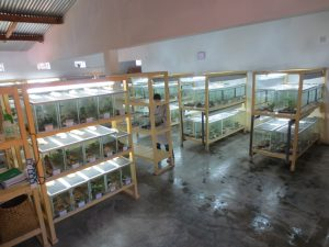 "The main ""frog room"""