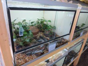 Terrarium for Mantidactylus betsileanus