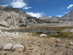 Yellow-legged frog habitat in Yosemite